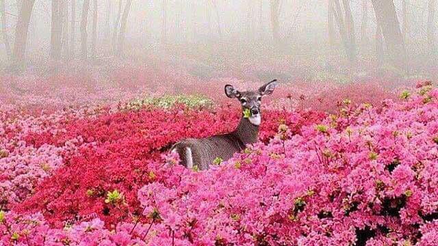 Het duurzame en liefdevolle soort